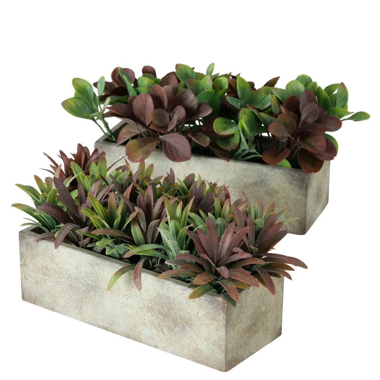 Boltze Topfpflanze im Kasten
