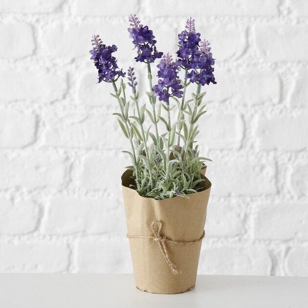 Boltze Topfpflanze Lavendel