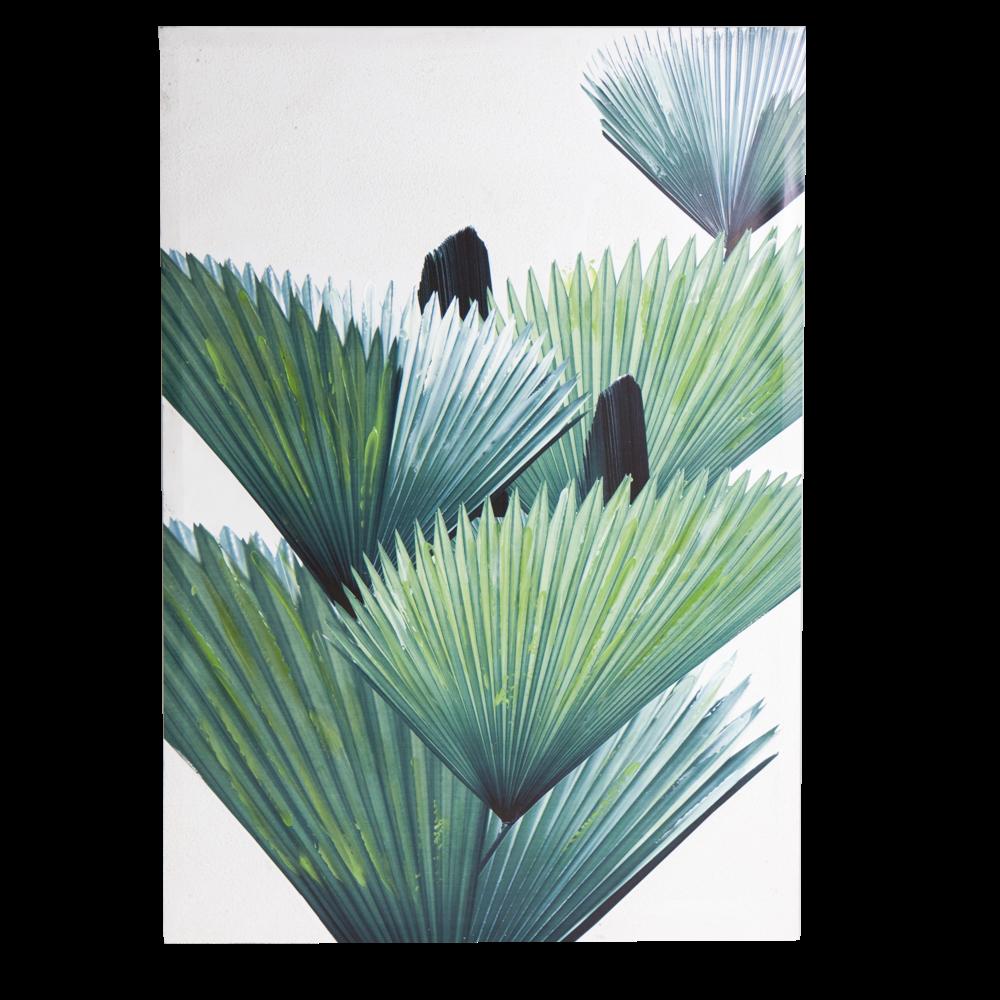 byRoom Bild Palm Leaf