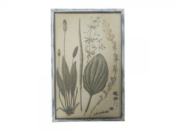 Chic Antique Bild mit Pflanzendruck