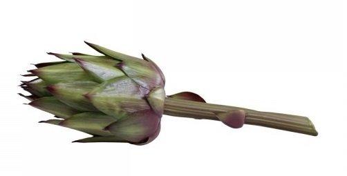 Chic Antique Fleur Artischocke