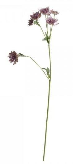 Chic Antique Fleur Distel 4