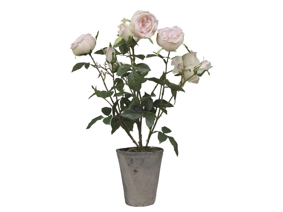 Chic Antique Fleur Rosenstrauch im Keramiktopf