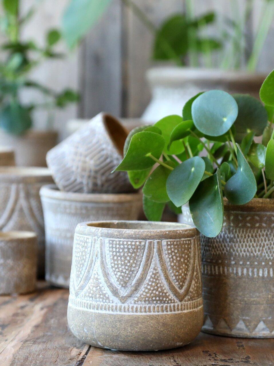 Pflanzenglück mit Chic Antique